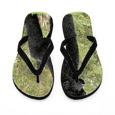 Poodle Standard 9Y181D-031 Flip Flops