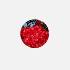 Rhodies Red 15M Rhododendrons fjowers  Mini Button
