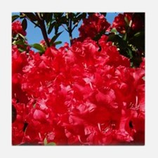 Rhodies Red 15M Rhododendrons fjowers Tile Coaster