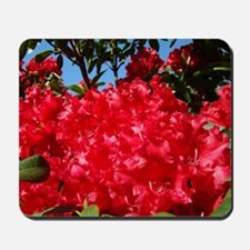 Rhodies Red 15M Rhododendrons fjowers ar Mousepad