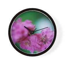 Focal Wall Clock