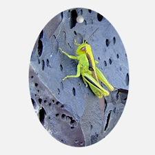 GrasshopperJournal Oval Ornament