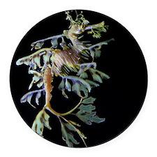 Leaf-see the shrimp Round Car Magnet
