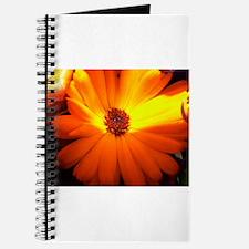 Cute Orange flower Journal