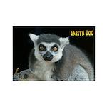 Ring-tailed Lemur Rectangle Magnet (100 pack)
