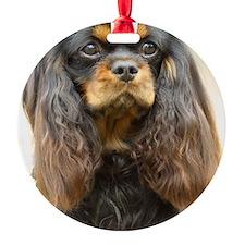 Cavalier King Charles Spaniel 9F51D Ornament