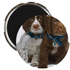 glass2_spaniels Magnet