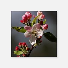 "appleblossomslaptopskin Square Sticker 3"" x 3"""