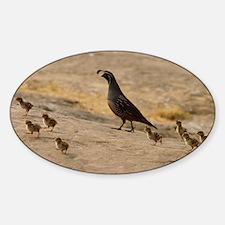 quailfamilylaptopskin Sticker (Oval)