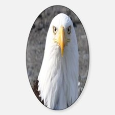 Bald Eagle Provider of Strength Decal