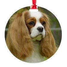 Cavalier King Charles Spaniel 9F098 Ornament