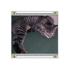 "Napping Cat-Scroll-M Square Sticker 3"" x 3"""