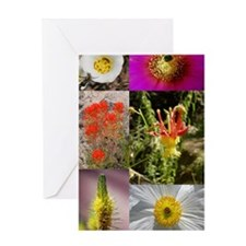 wildflower journal 1 Greeting Card