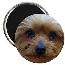 YorkshireTerrierMousePad Magnet