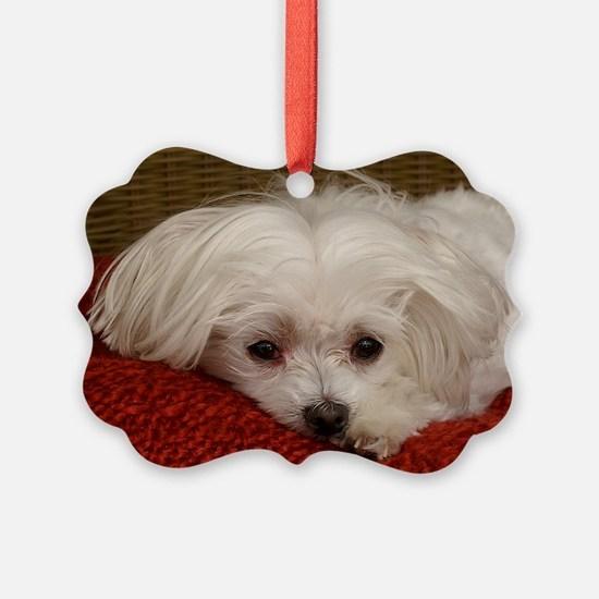 MalteseGCard Ornament