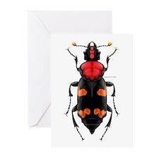Amer. Burying Beetle Greeting Cards (Pk of 10)