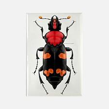 Amer. Burying Beetle Rectangle Magnet