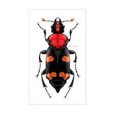 Amer. Burying Beetle Rectangle Stickers