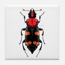 Amer. Burying Beetle Tile Coaster