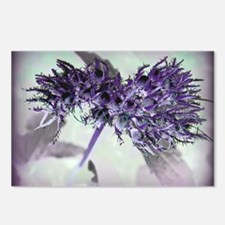 Purple Passion Postcards (Package of 8)