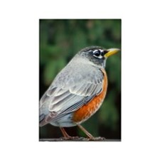 A Robins Glare Rectangle Magnet
