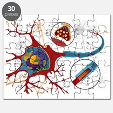 2000px-Complete_neuron_cell_diagram_numbere Puzzle