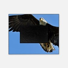 Majestic Bald Eagle Picture Frame