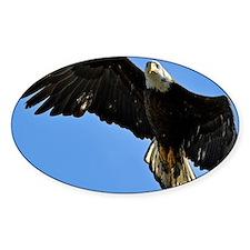 Majestic Bald Eagle Decal