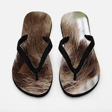 Scotty - closeup Flip Flops