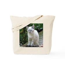 Blue eyed kitten Tote Bag