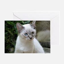 Blue Eyed Kitten Greeting Card