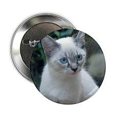 "Blue Eyed Kitten Sq.  2.25"" Button"
