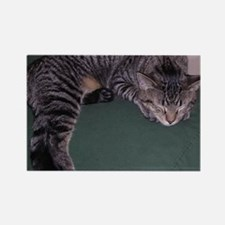 Napping Cat-WR Rectangle Magnet