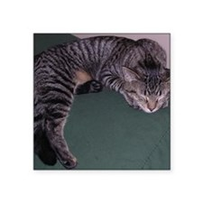 "Napping Cat-WR Square Sticker 3"" x 3"""