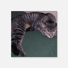 """Napping Cat-WR Square Sticker 3"""" x 3"""""""
