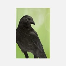 Crow_Green_iPhone2 Rectangle Magnet