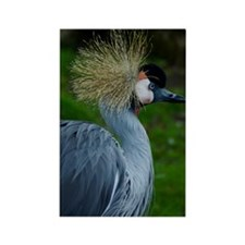 African_Crowned_Crane-2 Rectangle Magnet