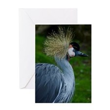 African_Crowned_Crane-2 Greeting Card
