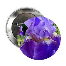 "purple iris 2.25"" Button"