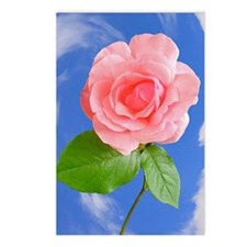 Pink Rose Gift iPad Hard  Postcards (Package of 8)