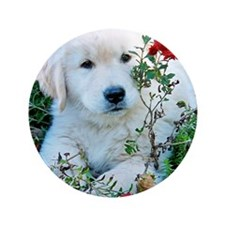 "Golden Retriever Puppy Gift iPad Hard  3.5"" Button"