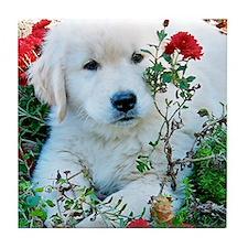 Golden Retriever Puppy Gift iPad Hard Tile Coaster