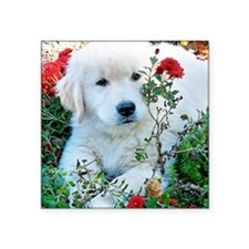 "Golden Retriever Puppy Gift Square Sticker 3"" x 3"""