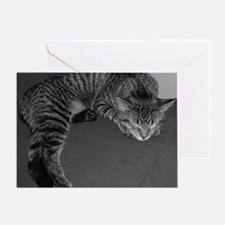 Napping Cat-BW-M Greeting Card