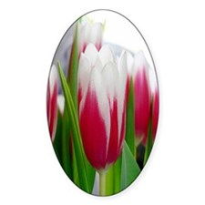 Sweet Desire Tulips Decal