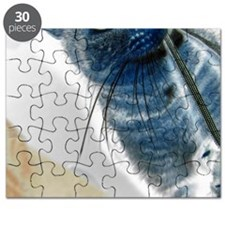 AccS-Portrait-Solar-M Puzzle