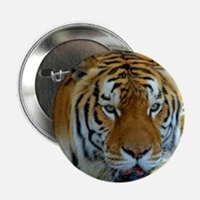 """Tiger_drinking_glass 2.25"""" Button"""