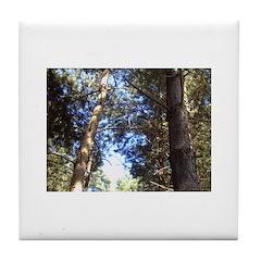 Sky Thru Trees Tile Coaster