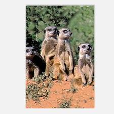 MEERKAT FAMILY PORTRAIT s Postcards (Package of 8)