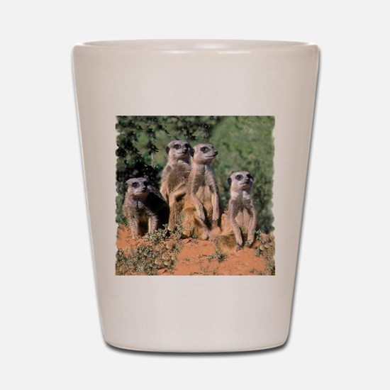MEERKAT FAMILY PORTRAIT stadium blanket Shot Glass